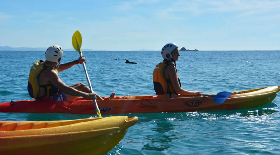 Kayak with the local Dolphins in Byron Bay