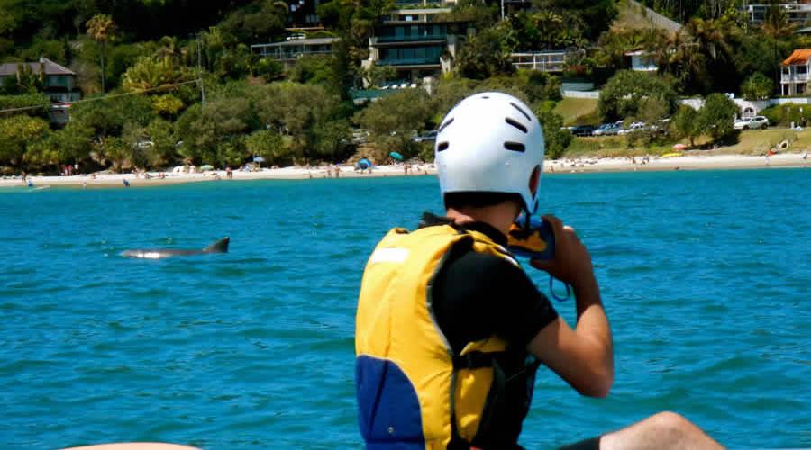 Wategoes Bay dolphin expereince