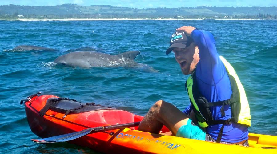 Go Sea Kayak Dolphins on Tour