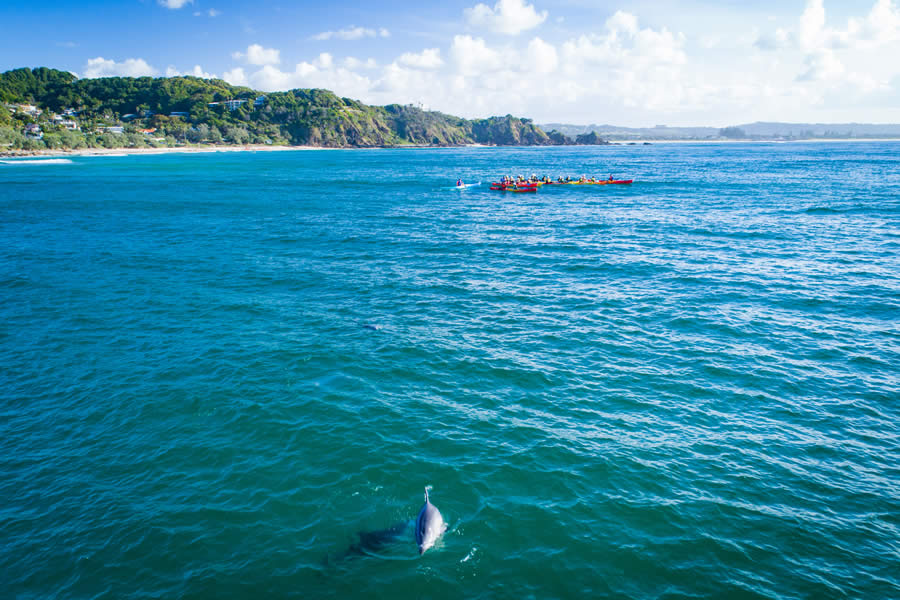 Dolphins and Go Sea Kayak in Byron Bay